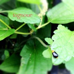tagnoue2014f