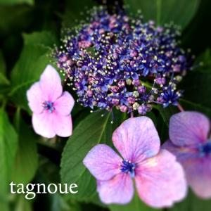 tagnoue2014e