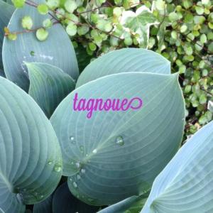 tagnoue2014a