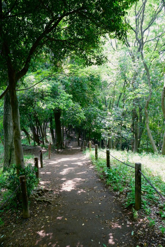 narrow path to downtown